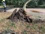 Baum auf Fahrbahn / 21.09.18
