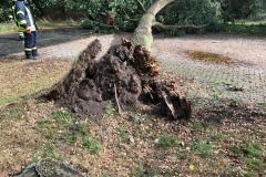 Baum auf Fahrbahn_2018-09-21_01