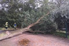 Baum auf Fahrbahn_2018-09-21_02