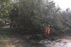 Baum auf Fahrbahn_2018-09-21_03