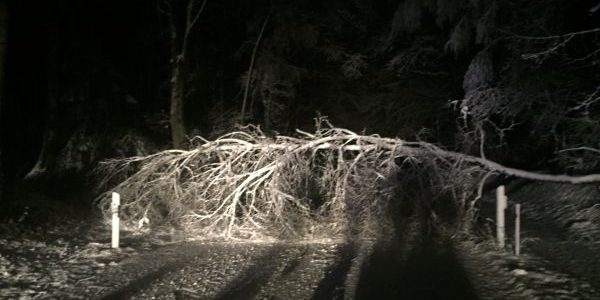 Bäume auf Fahrbahn / 13.01.2017