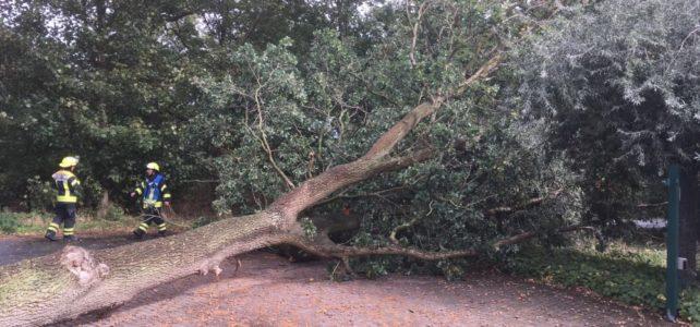 Baum auf Fahrbahn / 21.09.2018